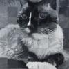 Sangria-cat-portrait-sq
